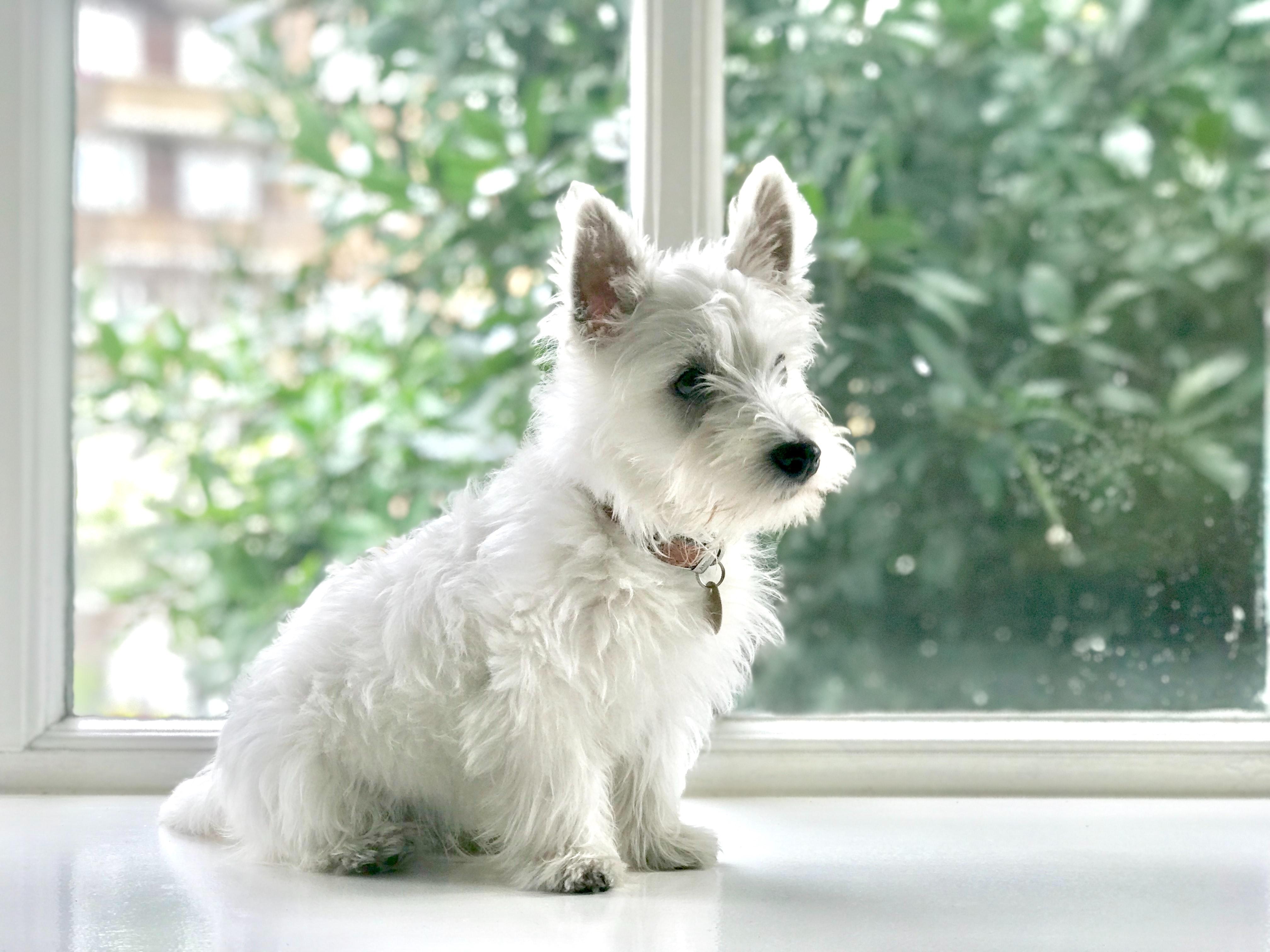 【夢占い】白い犬の夢が意味するものは?どんなメッセージ?