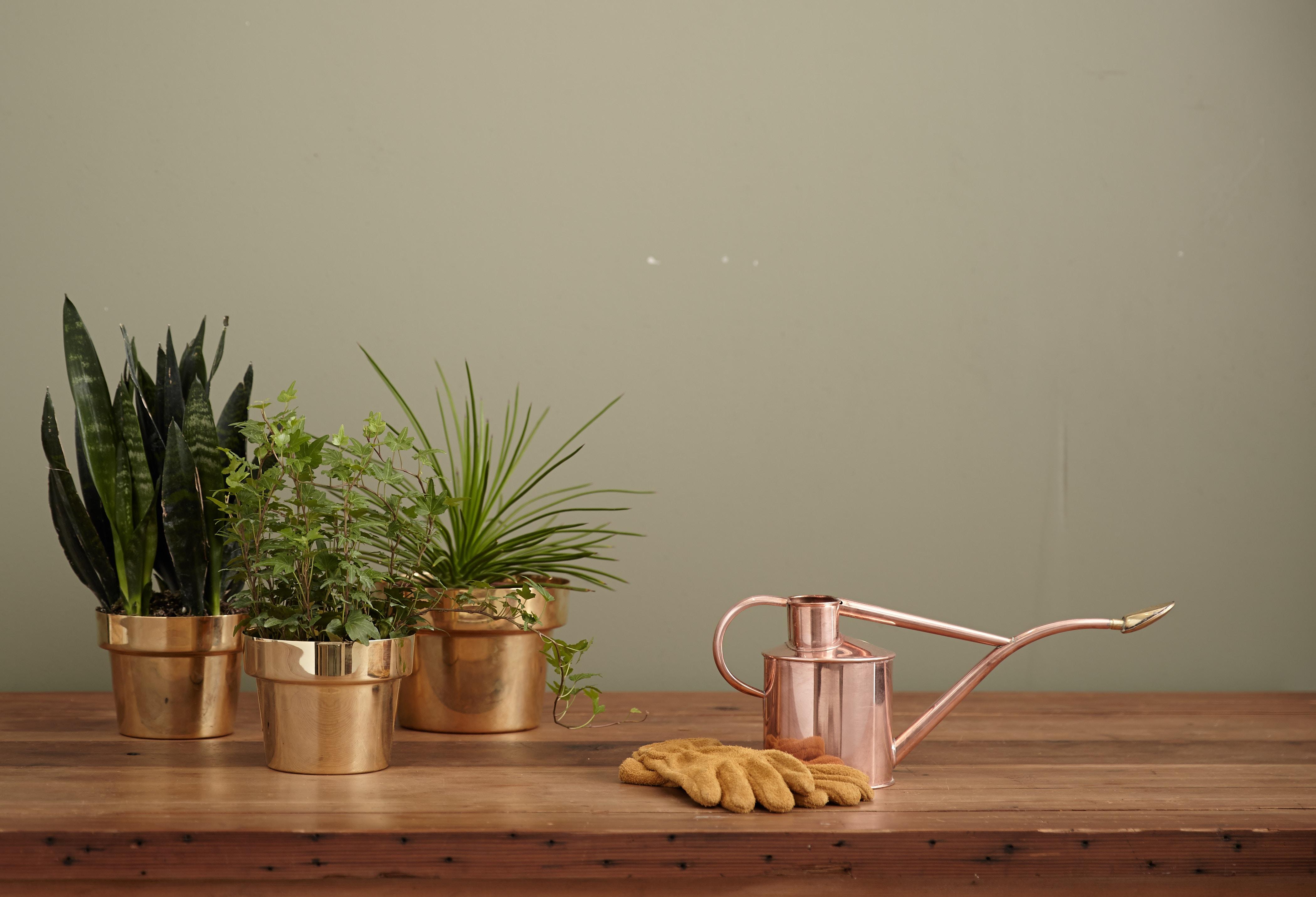 風水にはパキラがいい?運気UPにオススメ観葉植物の効果と置き場所