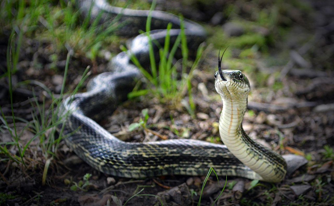 【夢占い】黒い蛇の夢の意味25選|不吉の兆し?実は吉夢でもある!