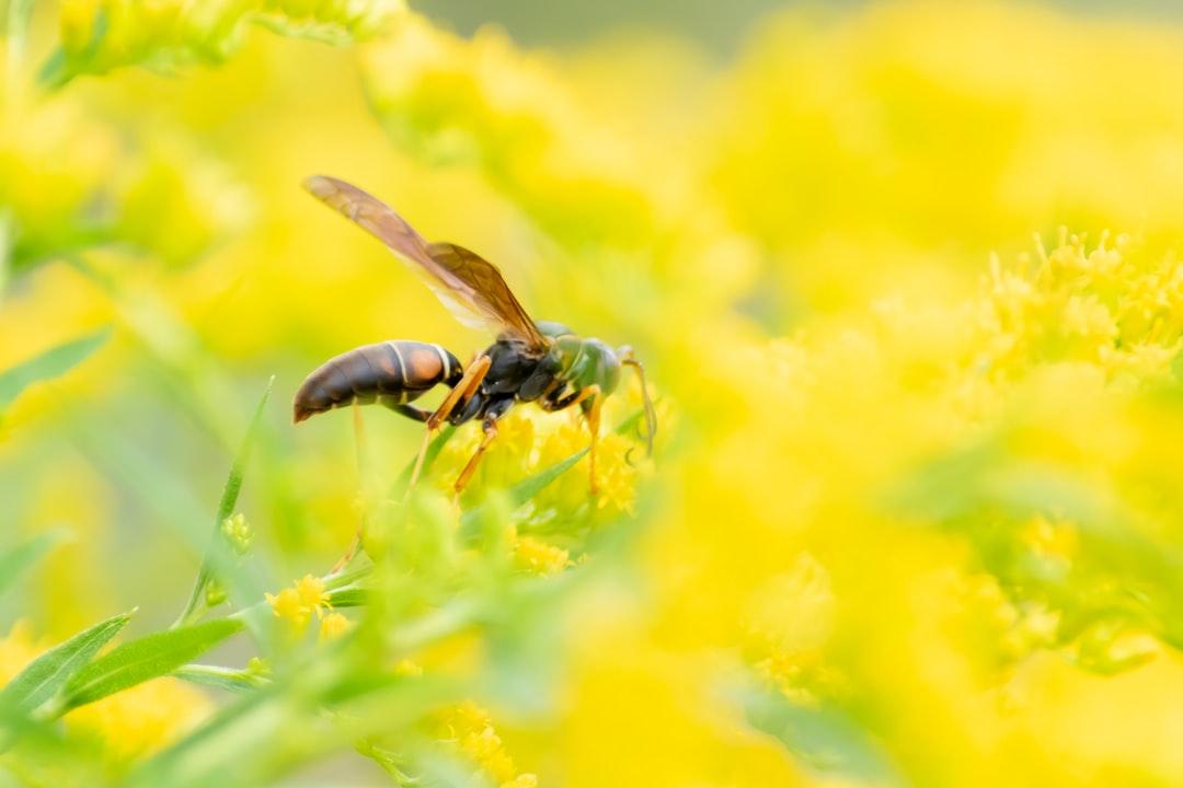 【夢占い】スズメバチに刺される夢の意味31選|襲われる夢は要注意?