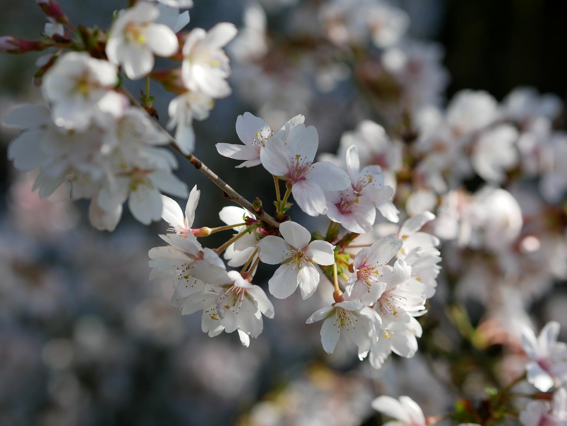 3月5日の誕生石・誕生花・星座・運勢・相性は?【365日誕生日占い】
