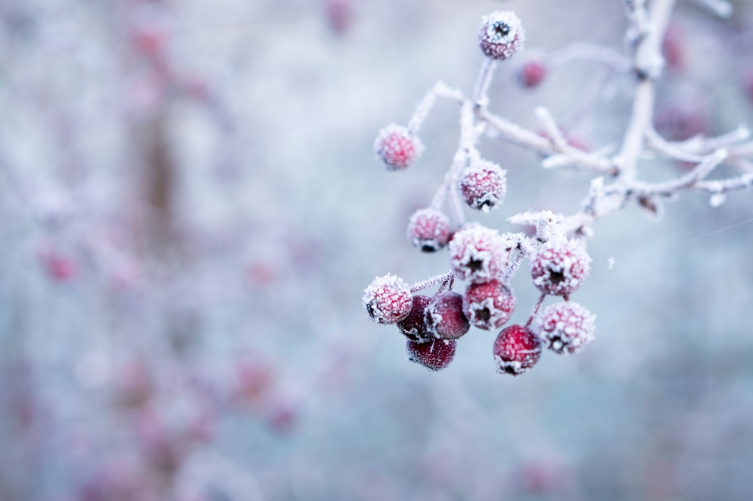 12月11日の誕生石・誕生花・星座・運勢・相性は?【365日誕生日占い】