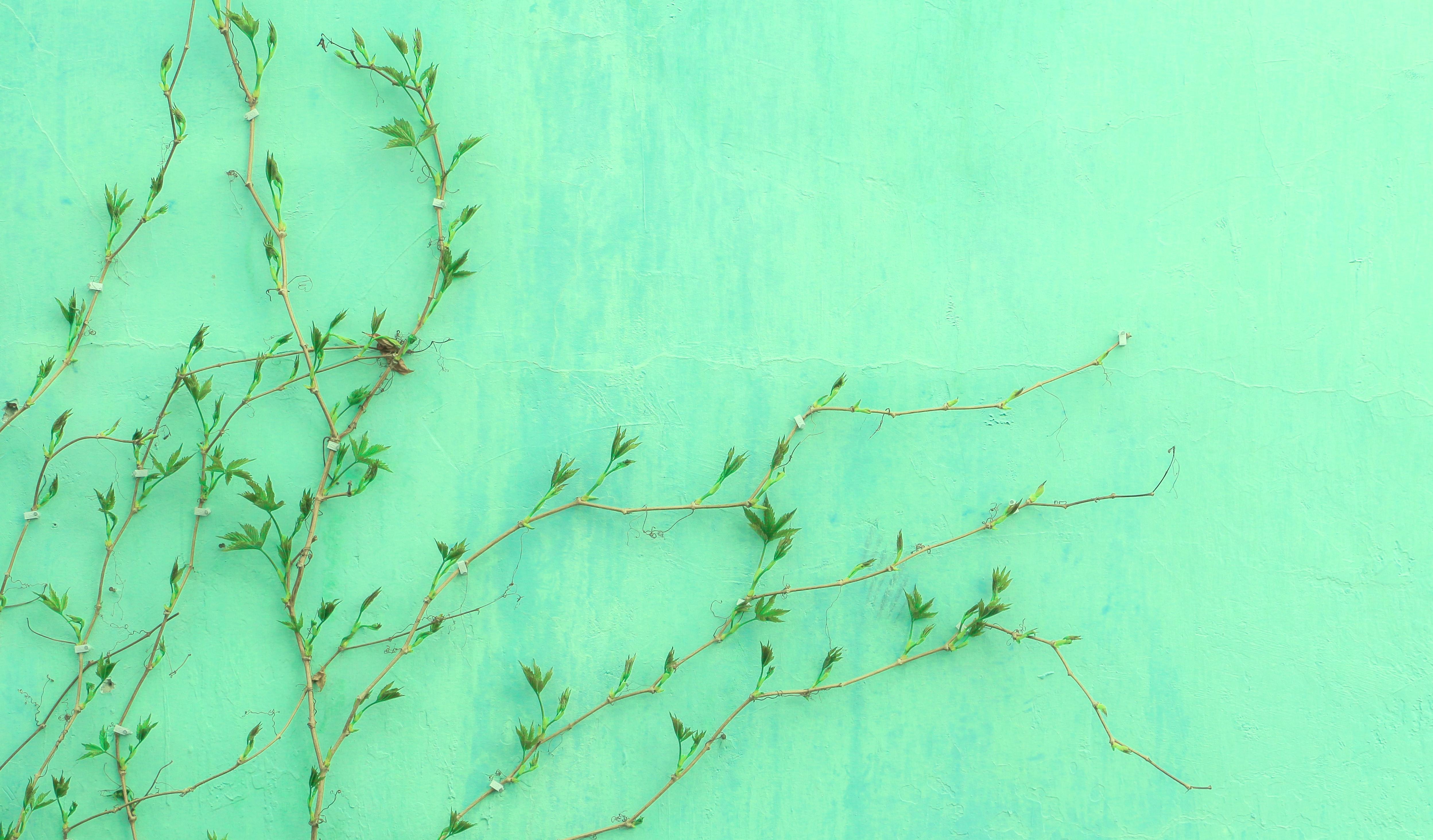 【夢占い】緑色の夢が示す意味21選 建物・植物・部屋・食べ物など