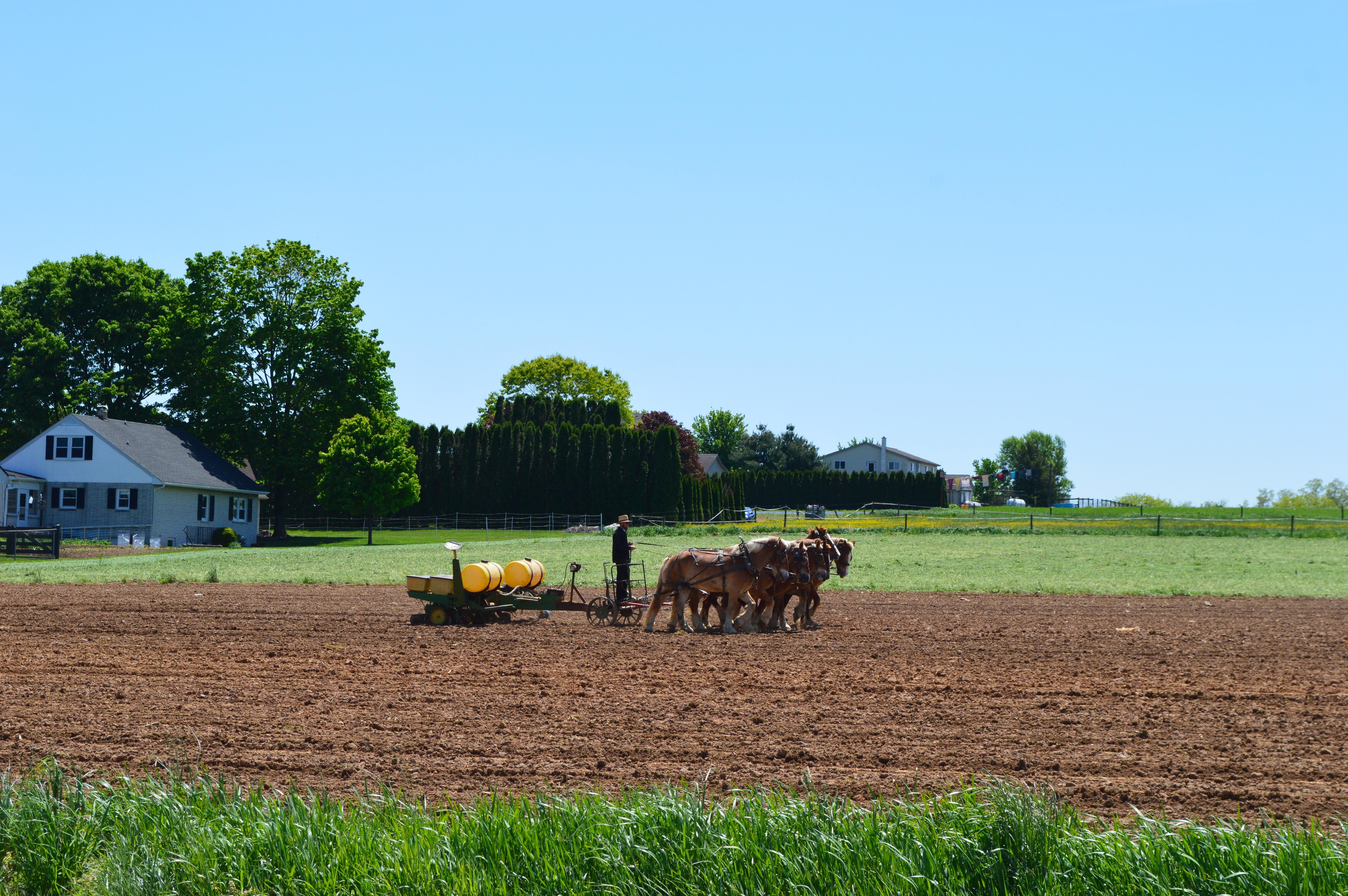 海外の畑の写真