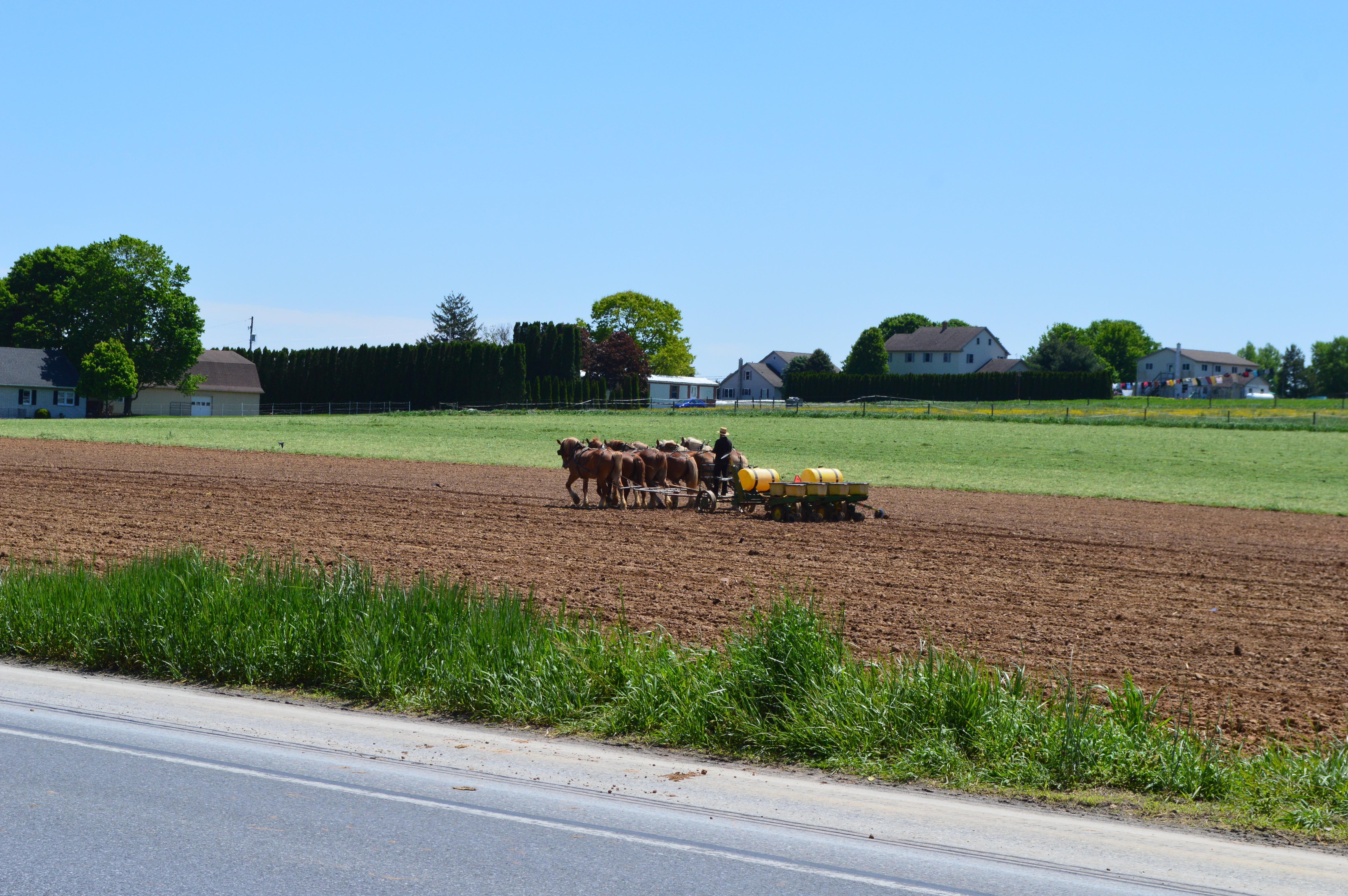 畑と馬車の写真です。
