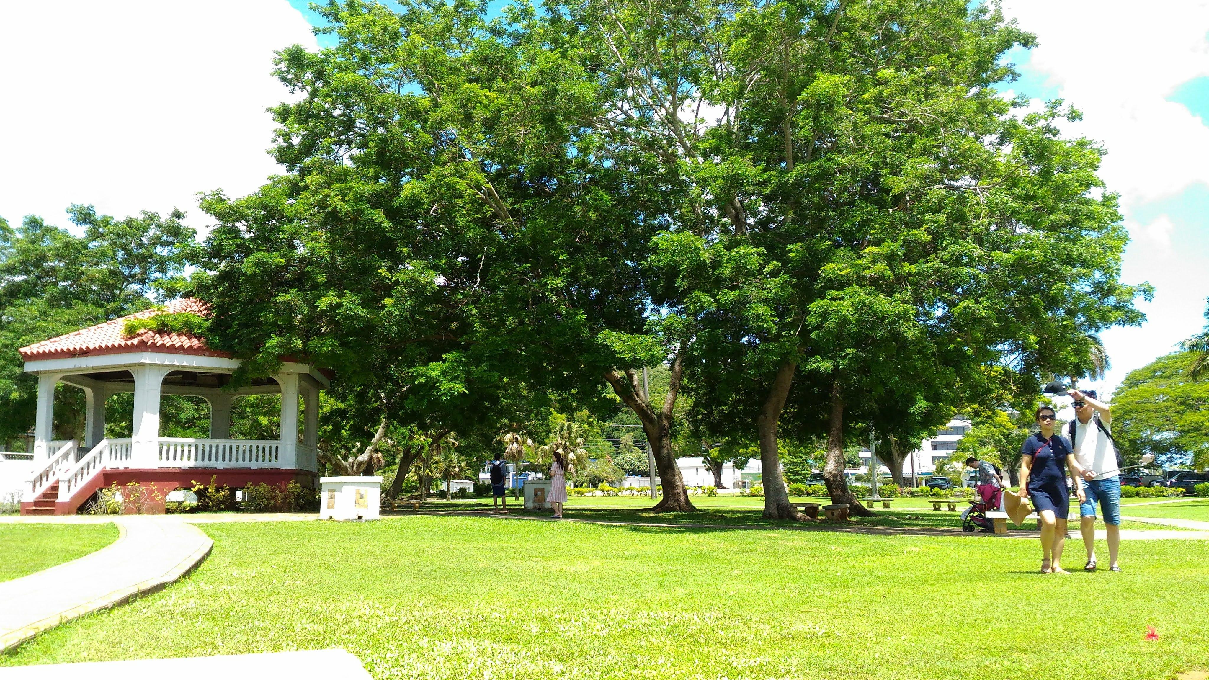 大きな木と芝生の写真です。