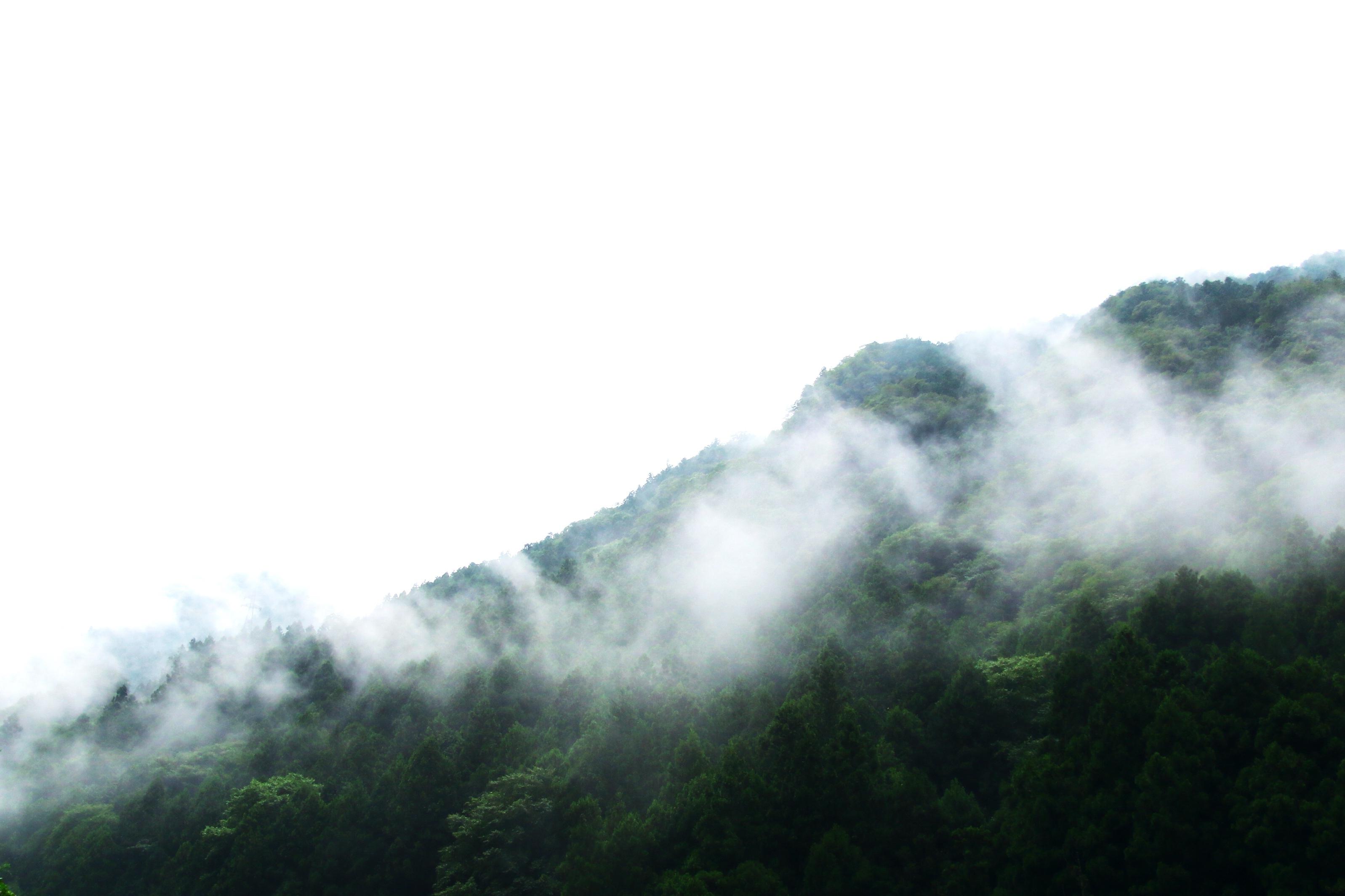 木の上に霧がある写真