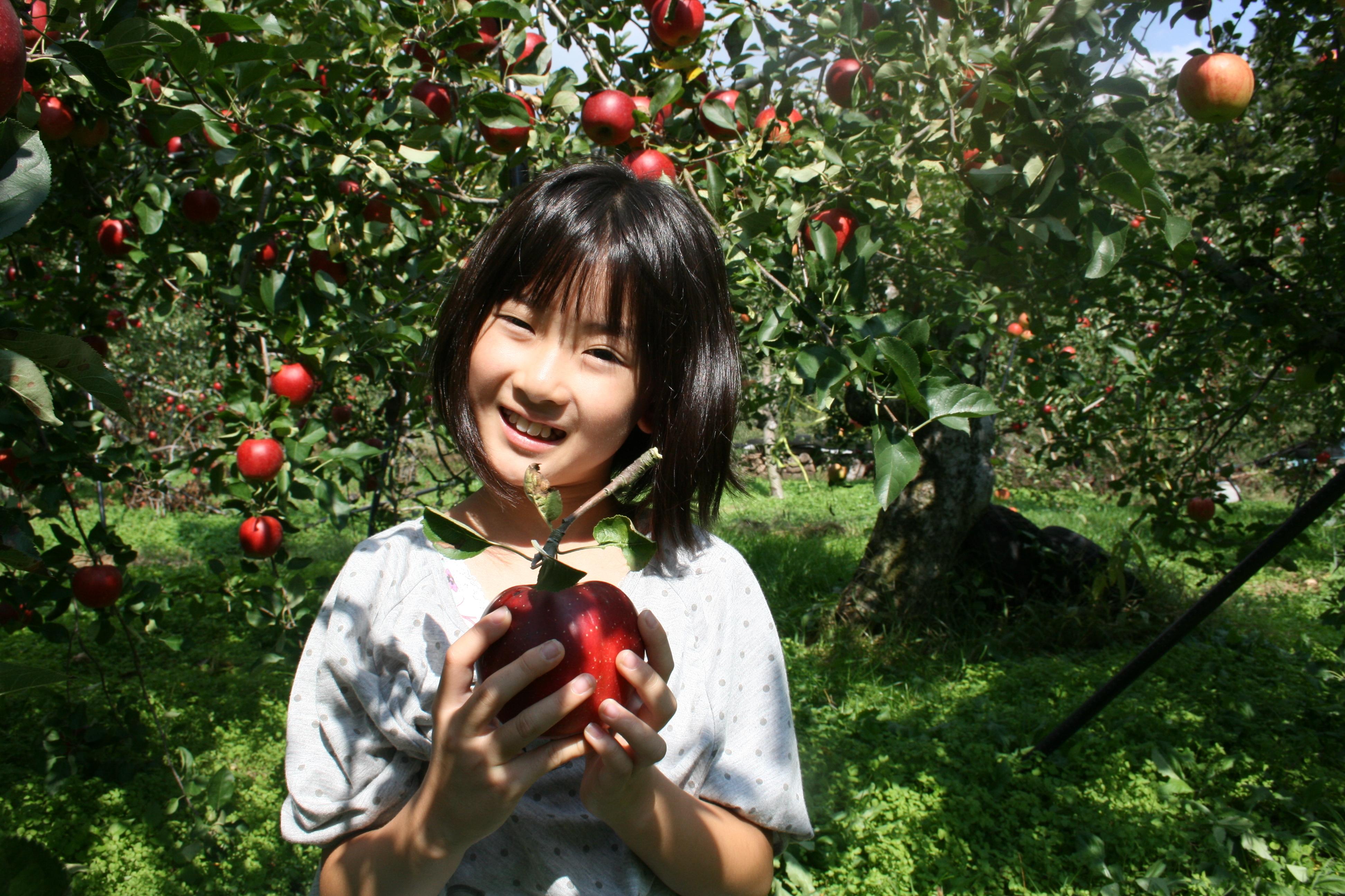 りんご畑でりんごを持つ少女。