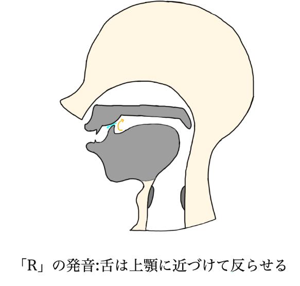 「R」の発音図(自作)