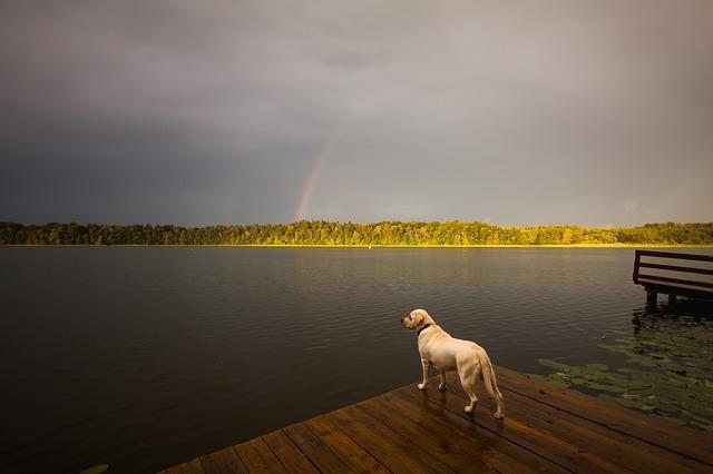 犬が虹をみている画像