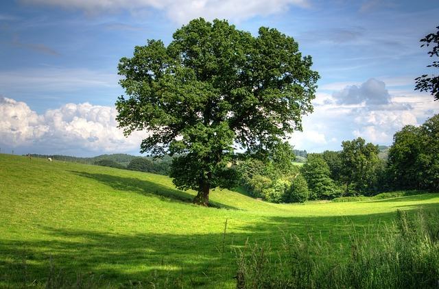 青空の下に大きな木1本立っており、奥には草原と奥には森が広がっている。