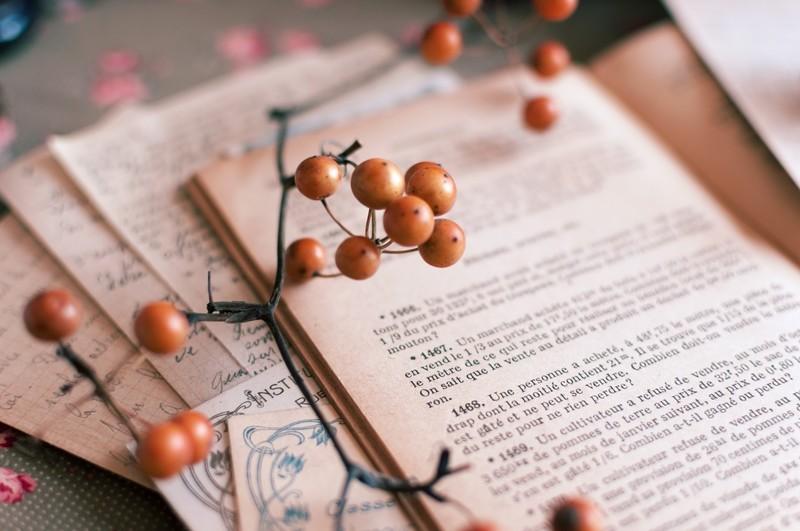 英語の本の上に木の実が乗っている写真