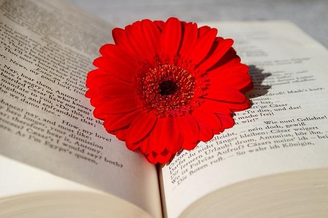 英語の本に赤い花が乗っている写真
