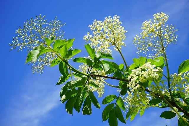 青空と植物、白い花