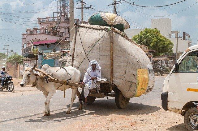 男性がラクダに引かれた荷台に乗っている