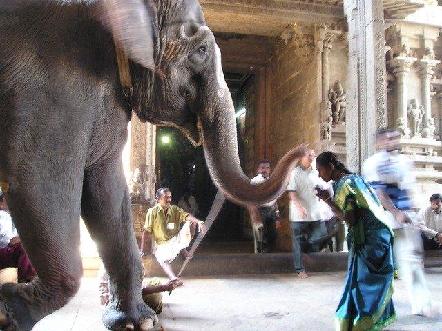 象に向かって女性がお辞儀をしている