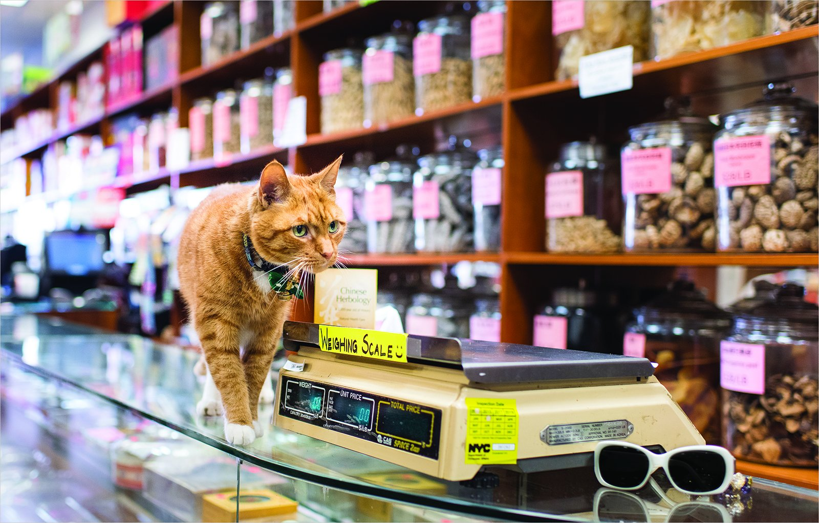 Andrew Marttilaの写真集『Shop Cats of New York』