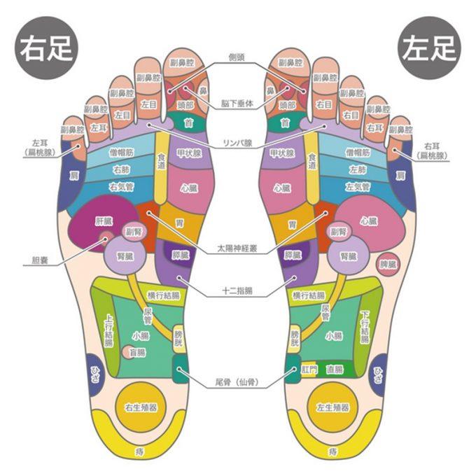 足裏の反射区画像