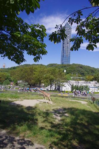 東山動物園と東山タワー