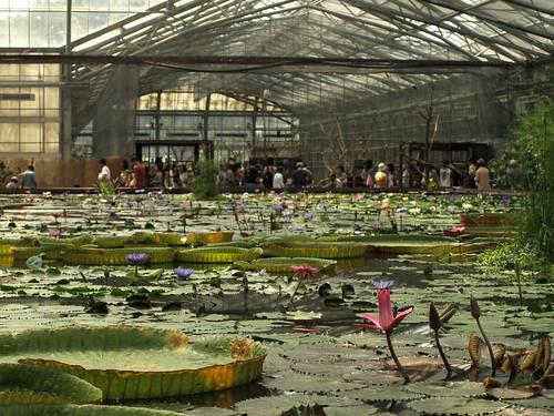 掛川花鳥園スイレンプール