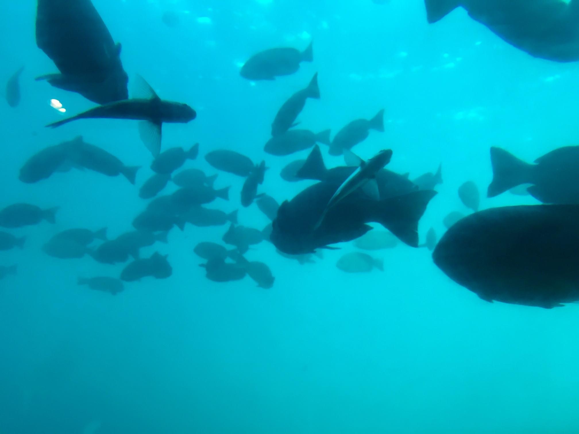 個人撮影:勝浦海中展望塔で見られる魚群