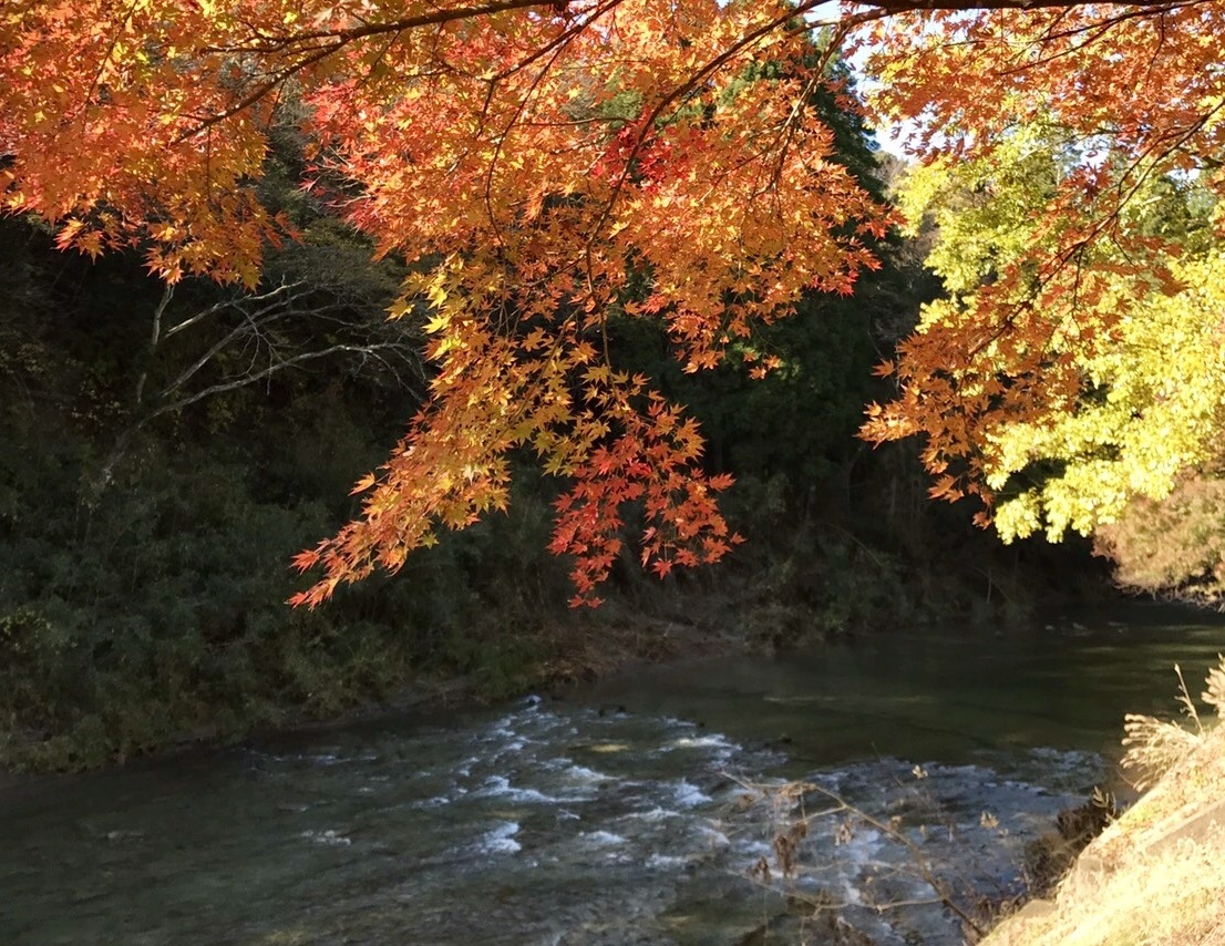 個人撮影:養老渓谷の紅葉