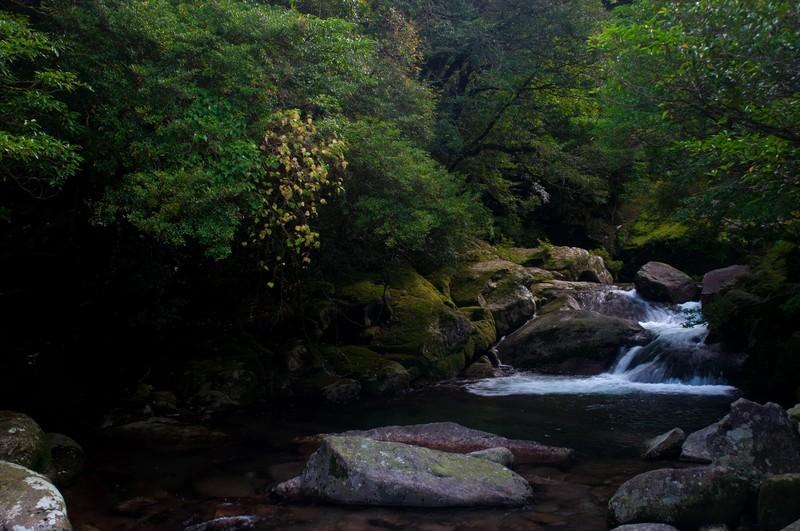 屋久島ツアーの日程は何日必要?おすすめプランと安い時期をご紹介!