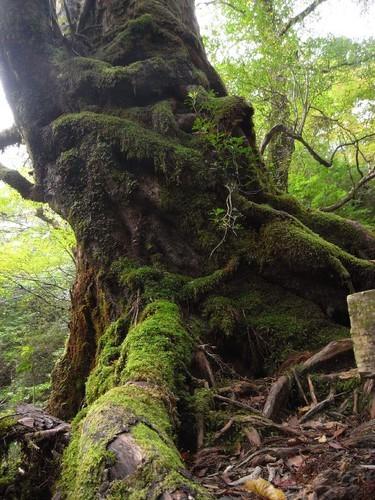 屋久島旅行で人気のプランやツアーご紹介!おすすめの季節や日数は?