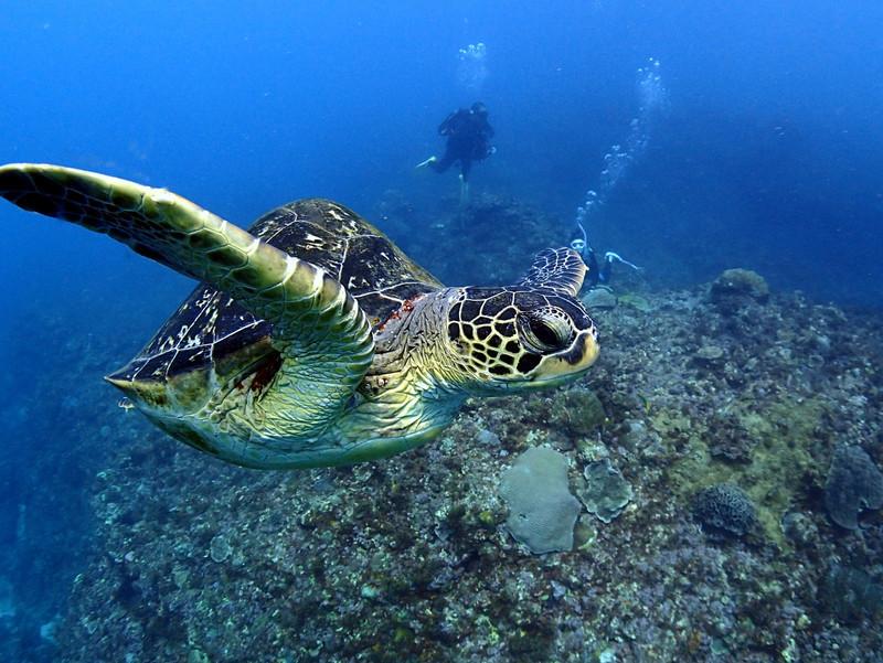 ハワイでダイビングをするならココ!初心者にも安心の人気スポットを紹介!