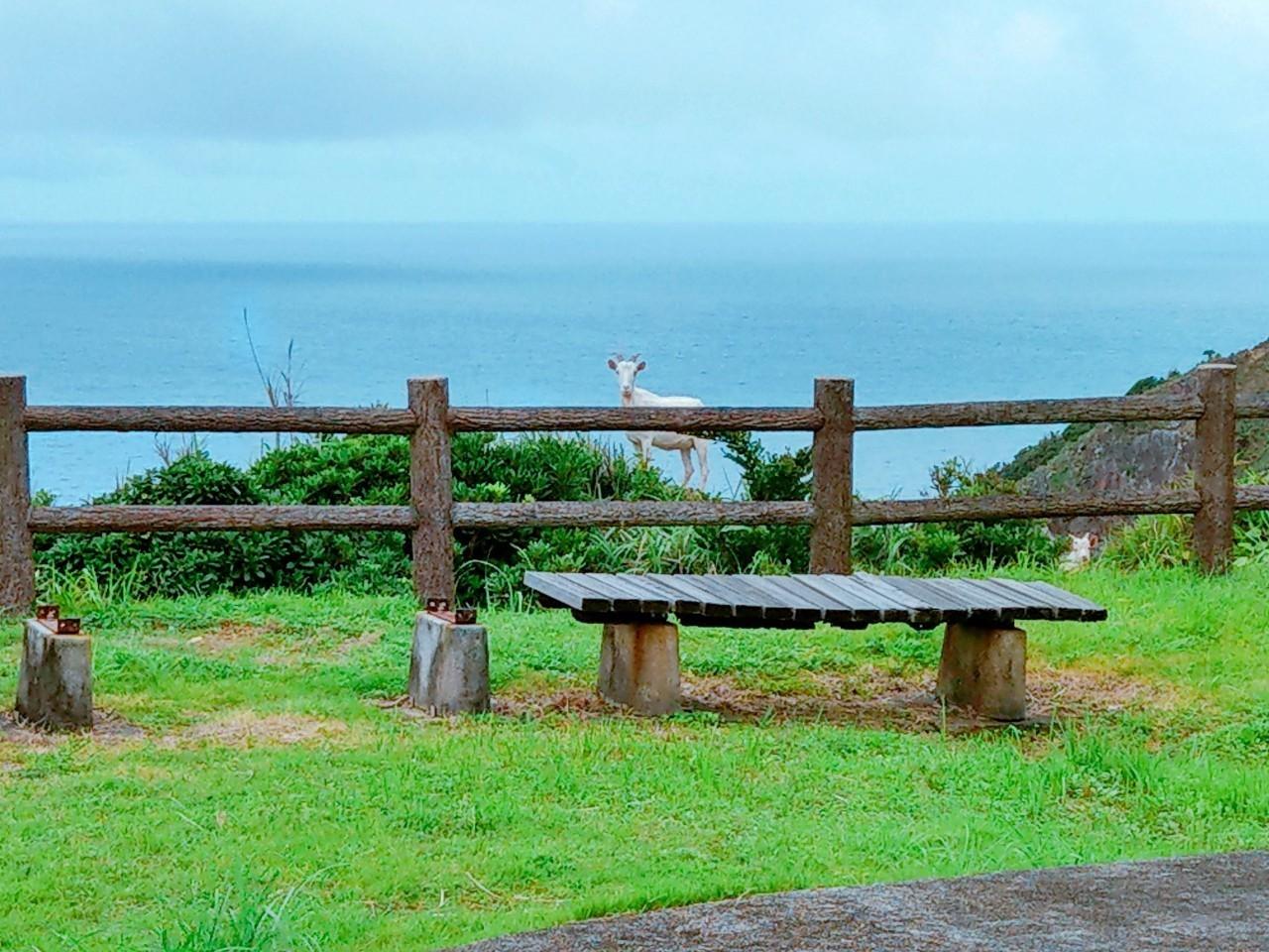 奄美大島に初めて旅行に行くならこう周る!見どころや楽しみ方をご紹介!