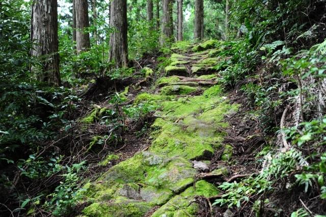 熊野古道をめぐるツアープランをご紹介!初心者が押さえておきたい見どころは?