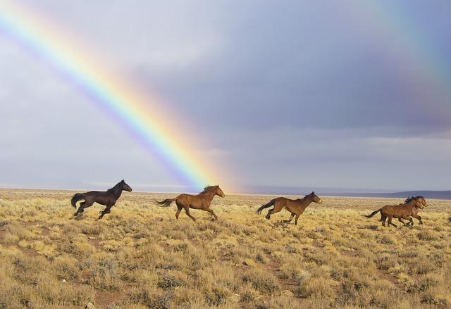 関東で出来る乗馬体験おすすめ12選!初心者でもすぐ馬に乗れる!