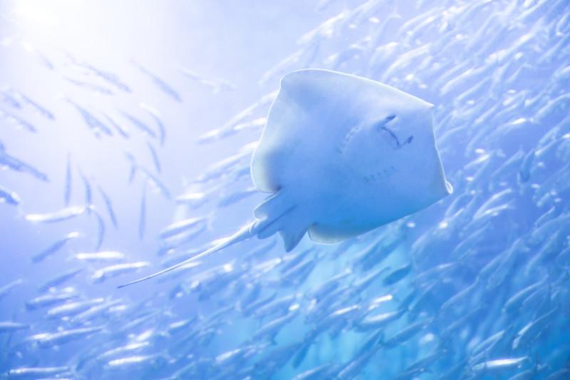 北海道の魅力ある水族館5選!観光で楽しめる人気の水族館をご紹介!