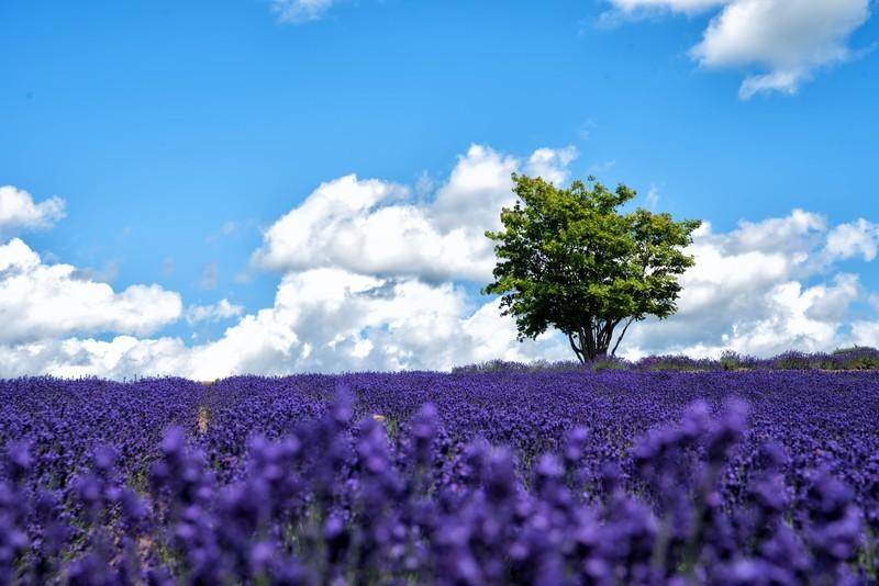 北海道絶景スポットランキング15!自然が織りなす景色に感動!