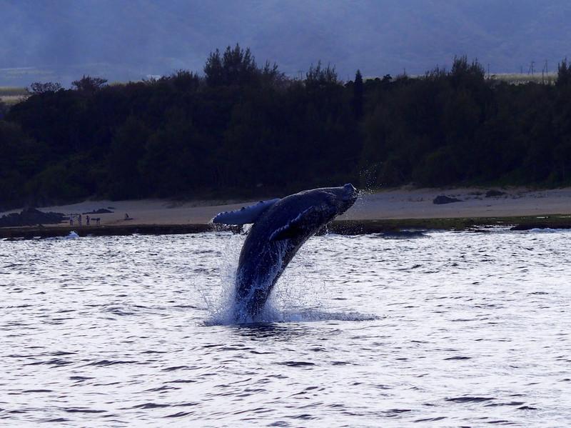 ホエールウォッチングはどこでできる?クジラが見れるスポットをご紹介!