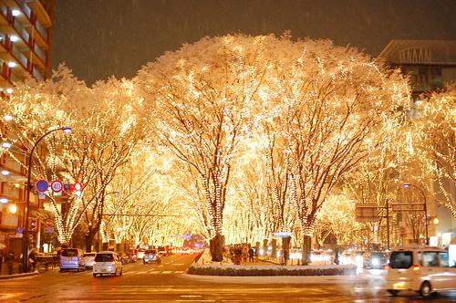 冬の宮城観光の魅力は?冬ならではの人気の名所や観光地をご紹介!