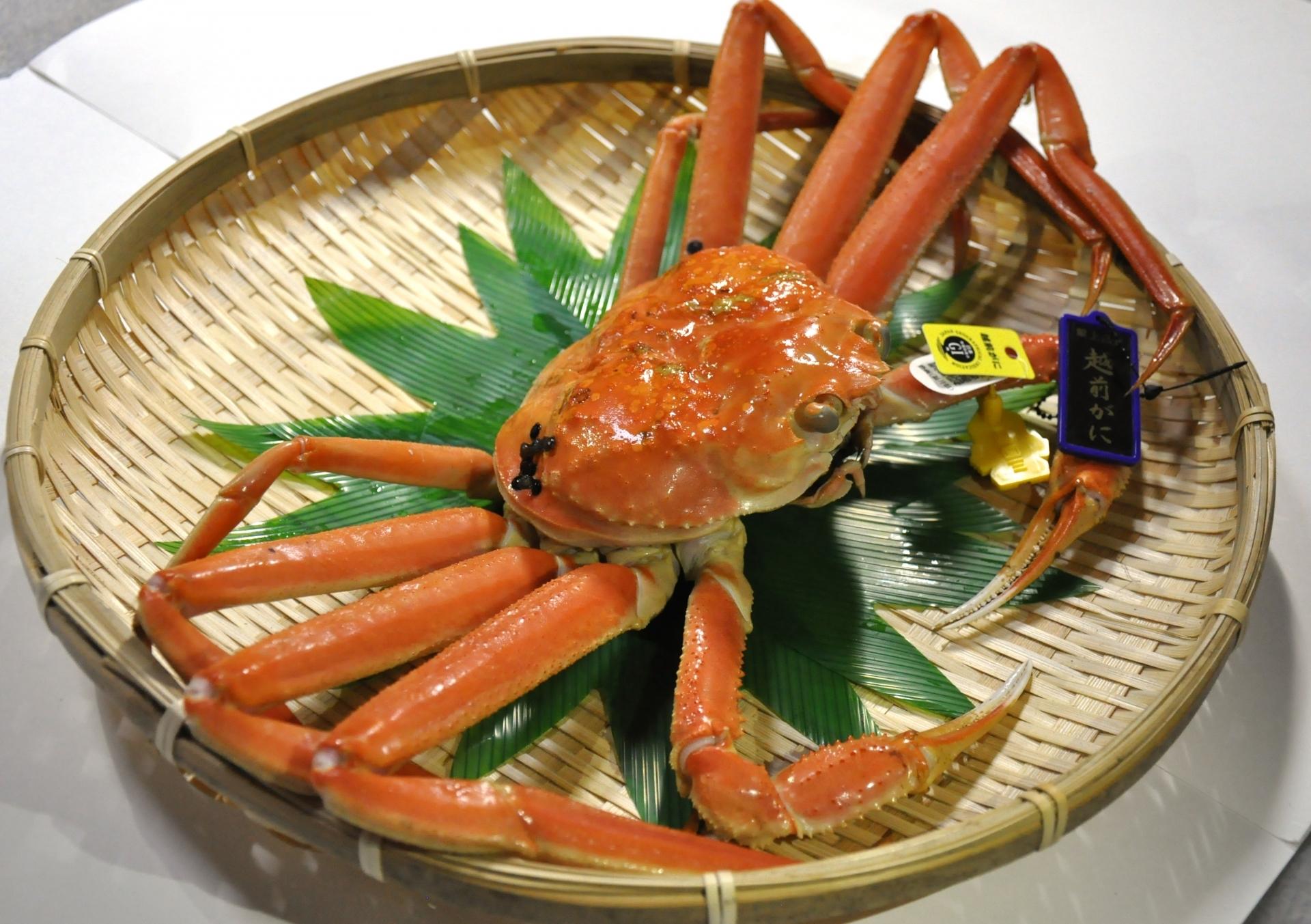 冬の福井観光で食べたい絶品グルメ15選!越前ガニなどの名物をご紹介!