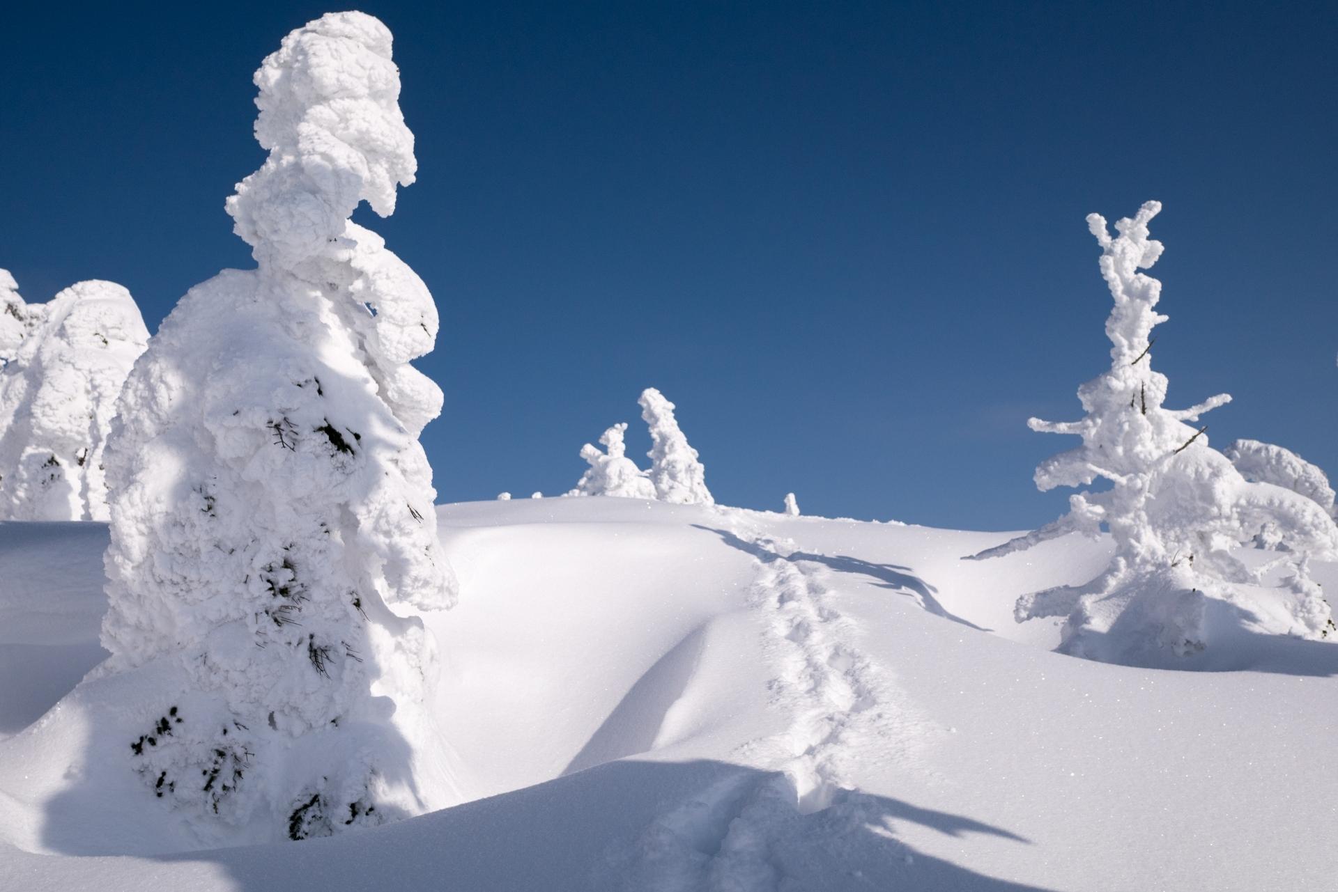 冬の青森観光はこう回る!おすすめのプランをテーマごとにご紹介!