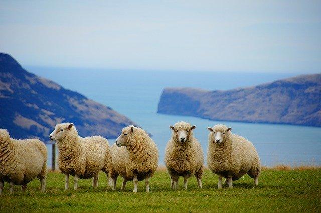 ニュージーランド観光で知っておきたい情報をご紹介!見どころは?