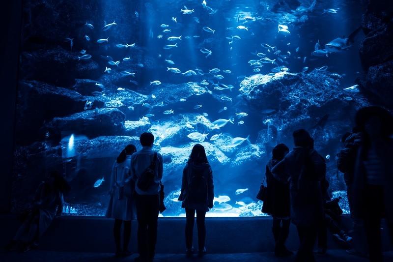 関東にあるデートでおすすめの水族館ベスト10!人気のスポットをご紹介!