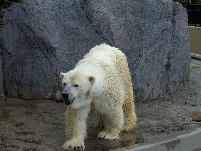 北海道で出会えるかわいい野生動物6選!旅行で見られたらラッキー!