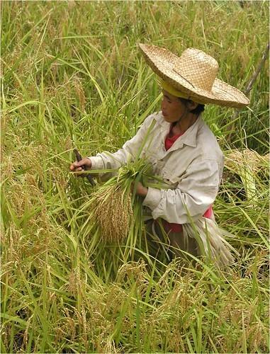 フィリピンの永住権「クオータービザ」の取得条件は?