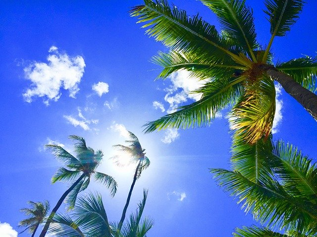 ハワイで安く買えるブランド10選!旅行と合わせてお得にショッピング!