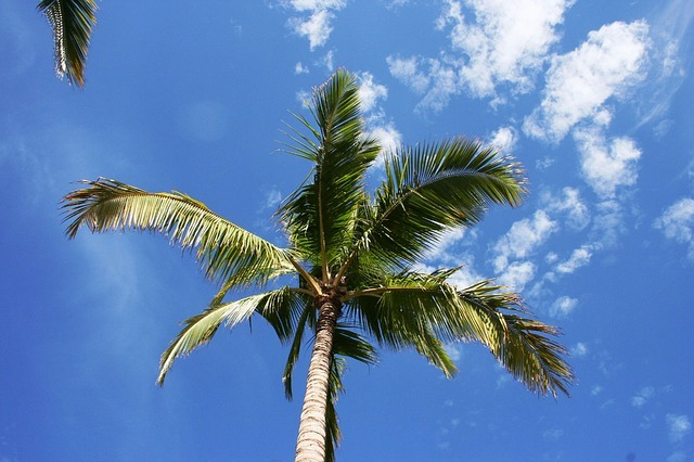マウイ島のおすすめ観光プラン!テーマごとにおすすめプランをご紹介!