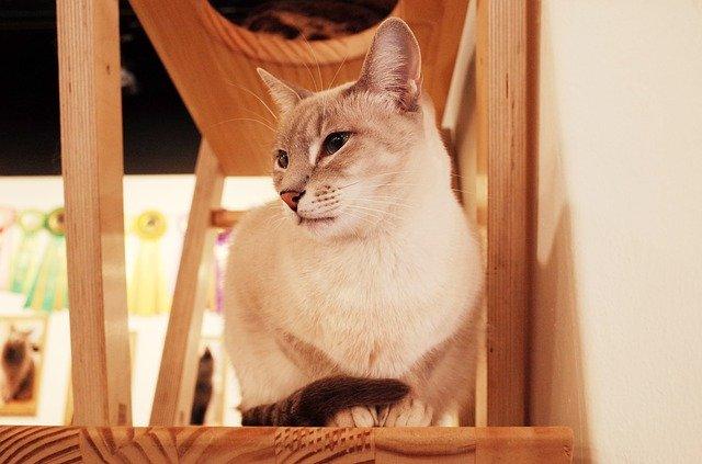 札幌の猫カフェおすすめ12選!雨の日のデートやお出かけにもピッタリ!
