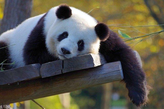 上野動物園は再入場できる!ランチやコンビニで外に出て再入場もOK!