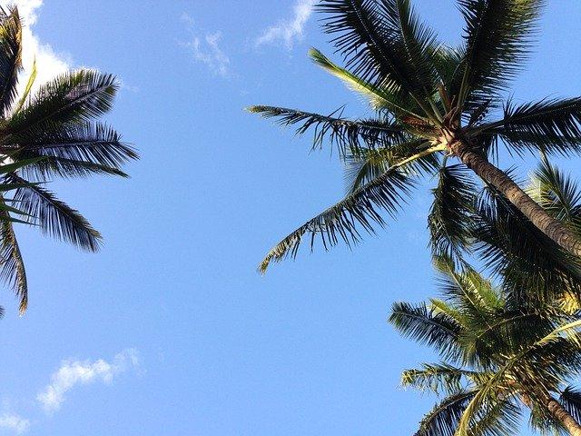 カカアコはハワイ観光でおすすめのスポット!おすすめのアートやスポットをご紹介!