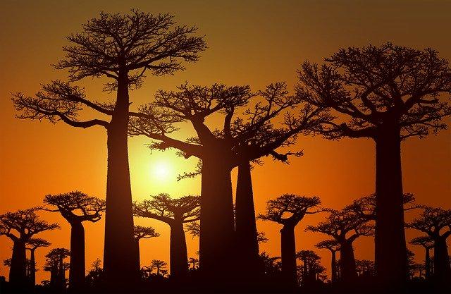 マダガスカルの面積ってどのぐらい?日本と比較して大きさをわかりやすく解説!