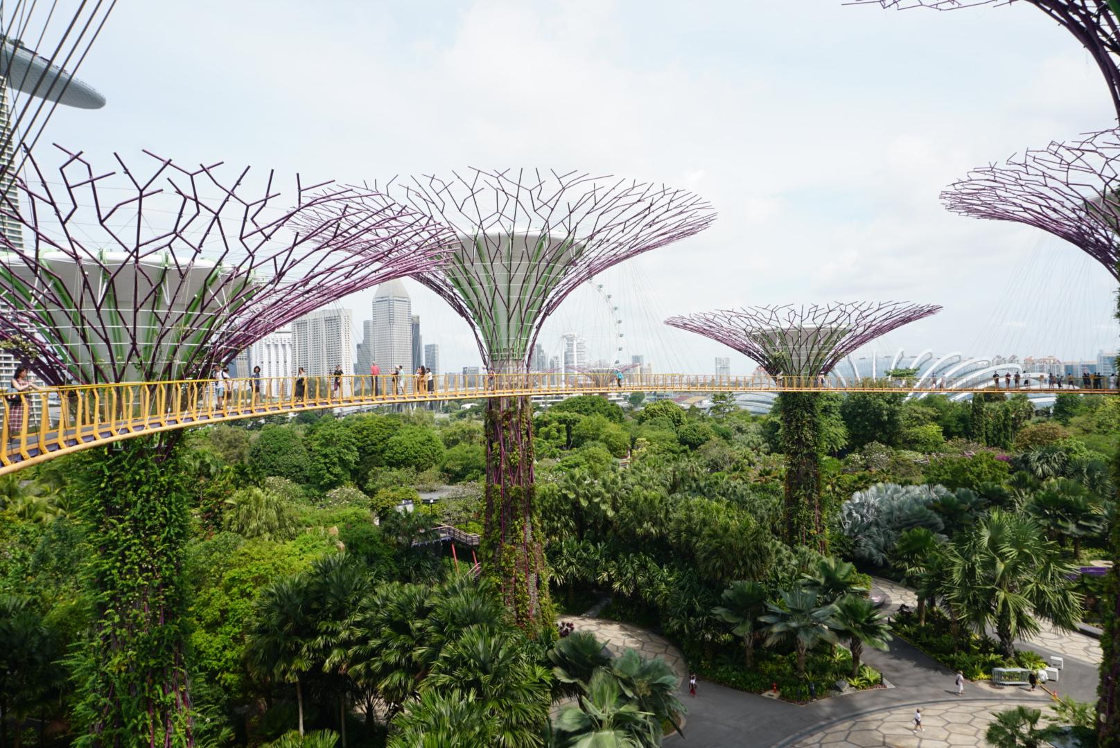 シンガポールの2大植物園を解説!ボタニックガーデンとガーデンズバイザベイ!