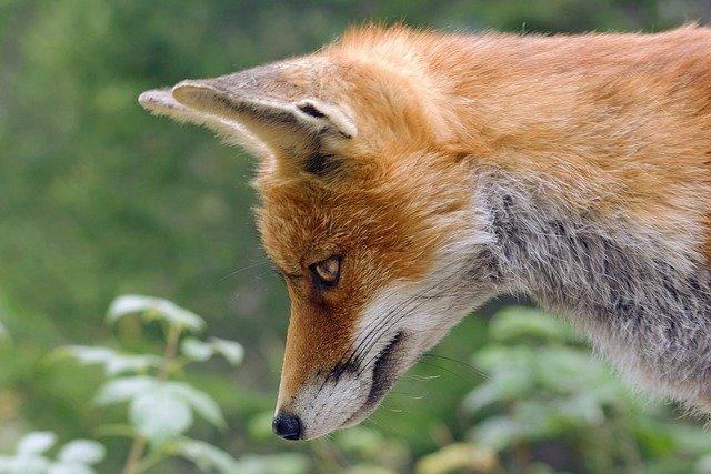 有名な狐の妖怪16選!かっこいい伝説の存在の由来や能力を解説!